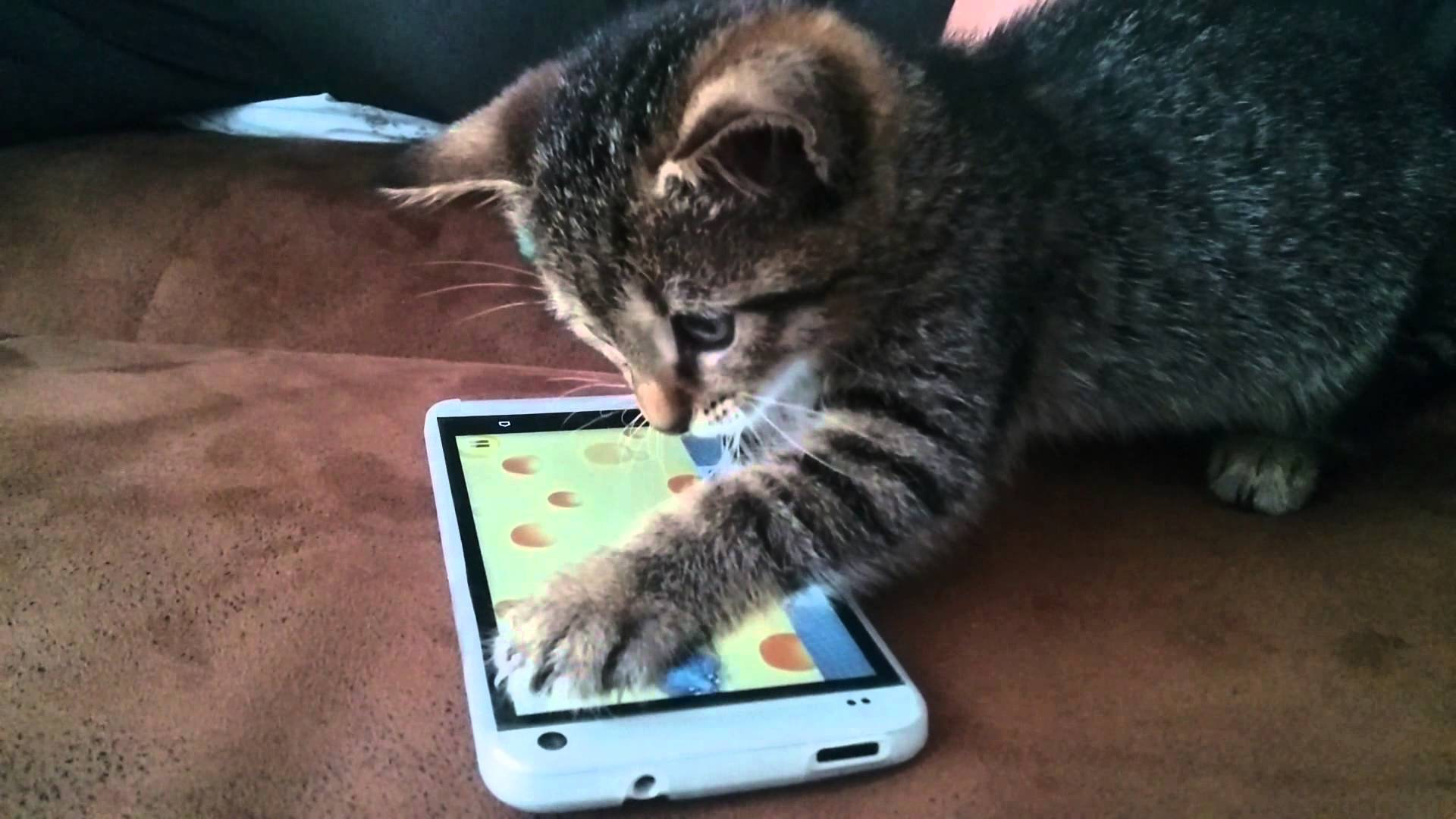 Cat playing a videogame on a smartphone