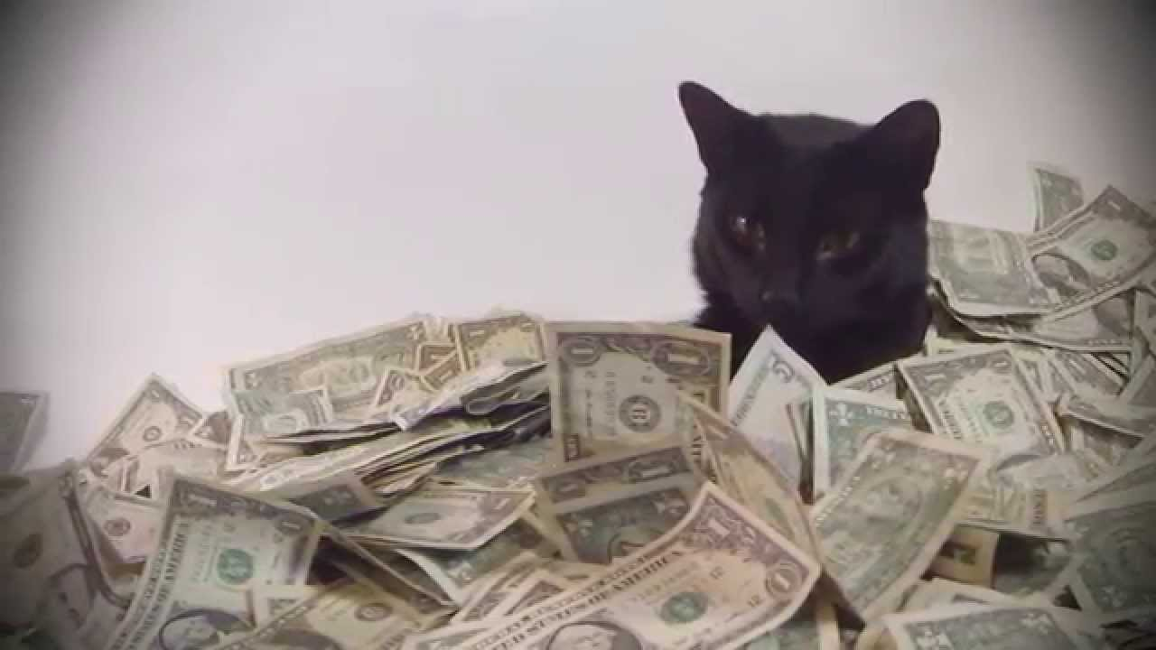 Cat sleeping on money